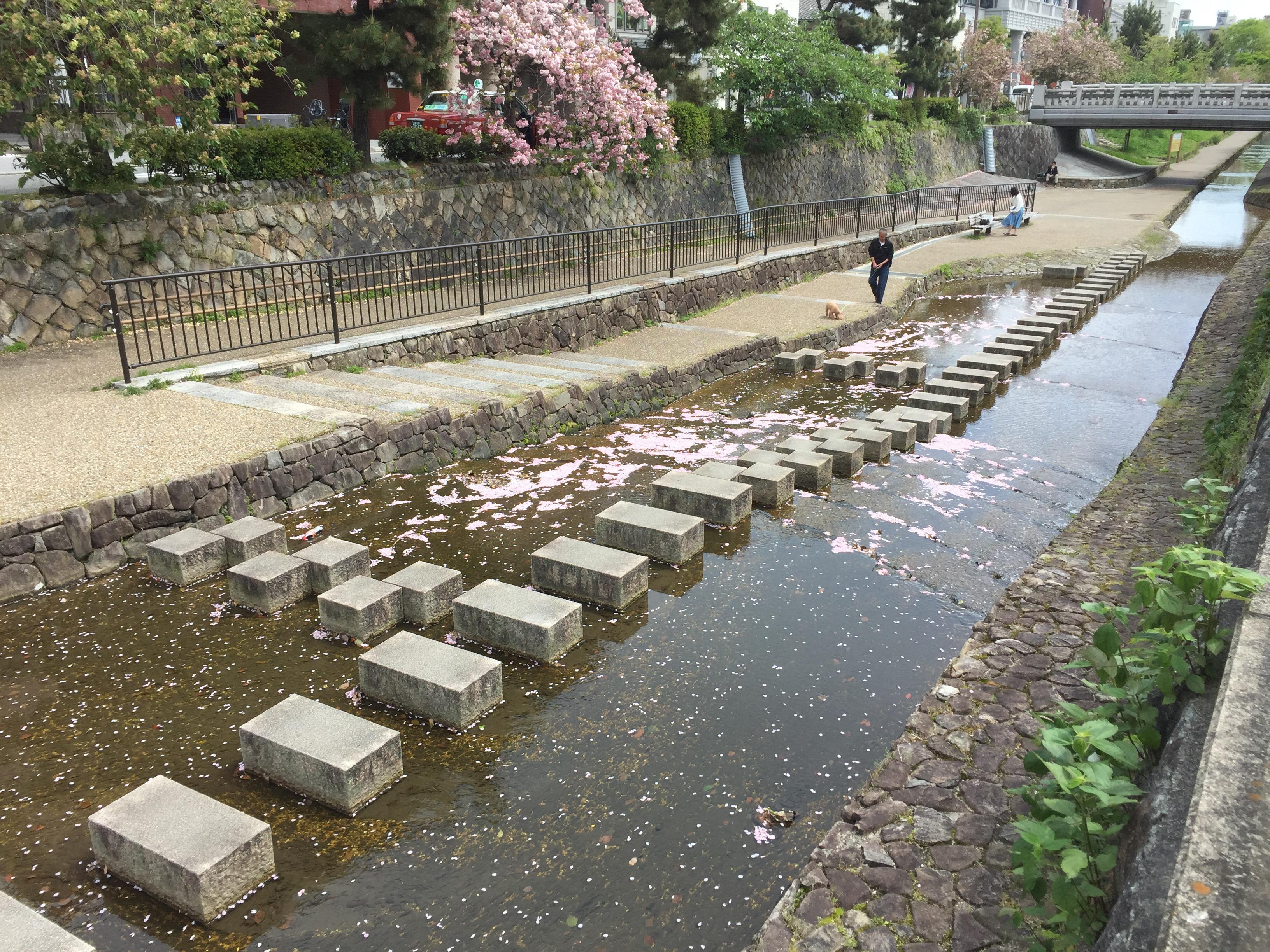 桜の花弁が川の流れに