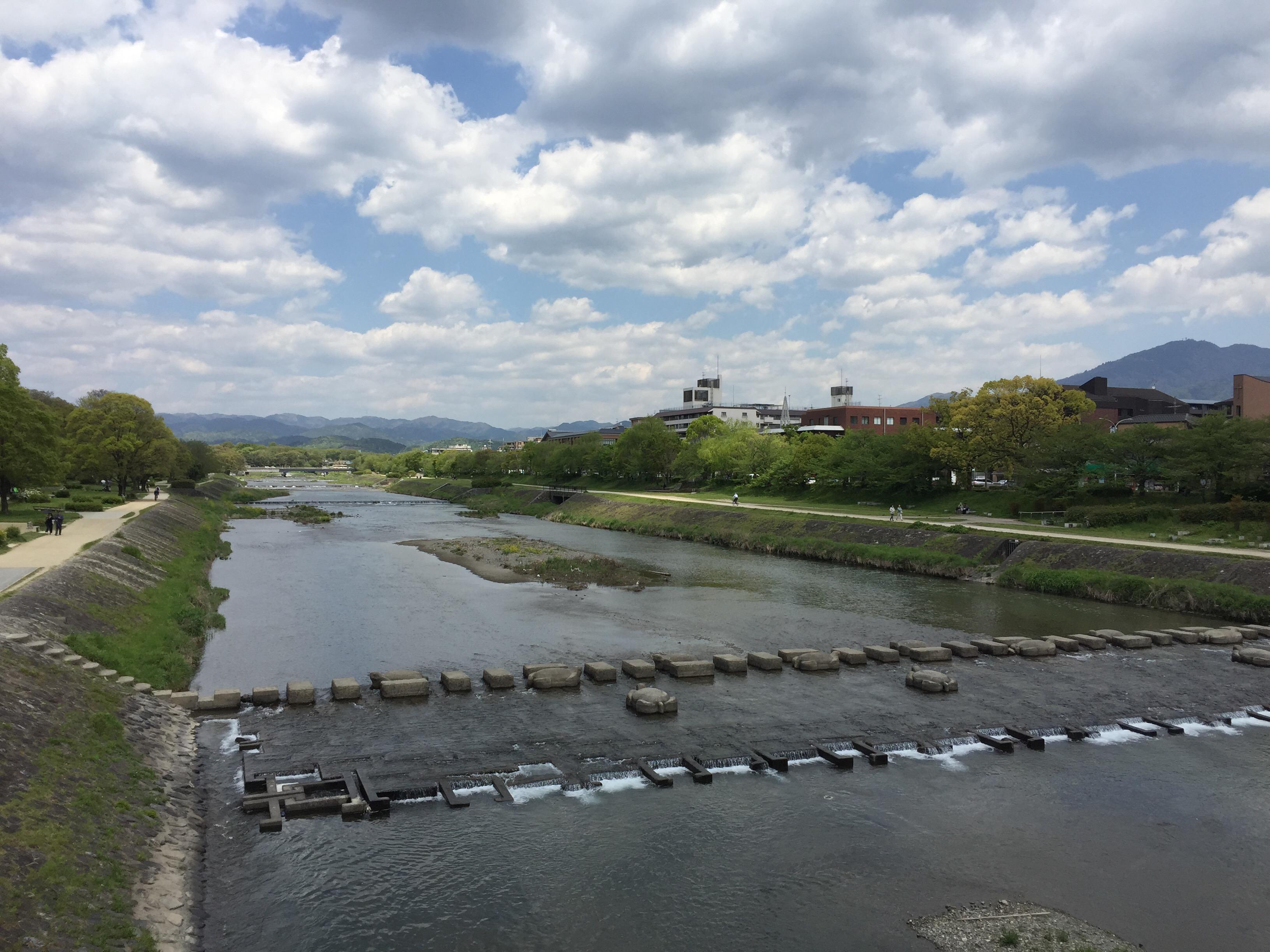 高野川ここからか観るのがベスト!