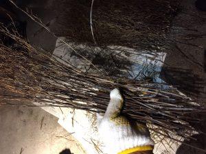 これが黒穂。あかりになる前に少々下処理が必要です。